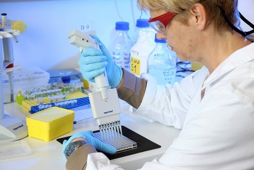Stock Photo: 1848-547183 Laboratory, a scientist is transferring protein samples with a multichannel pipette onto a crystallisation plate, Centre for Medical Biotechnology University Duisburg_Essen, North Rhine_Westphalia, Germany, Europe