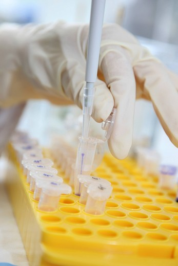 Stock Photo: 1848-548275 Laboratory, pipetting of DNA samples into Eppendorf tubes, Centre for Medical Biotechnology University Duisburg_Essen, North Rhine_Westphalia, Germany, Europe