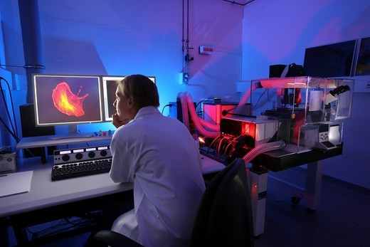 Biotechnology, fluorescence microscope, a special version of a light microscope that can visualise fluorescent labelled molecules within a cell, Centre for Medical Biotechnology of the University Duisburg_Essen, North Rhine_Westfalia, Germany, Europe : Stock Photo
