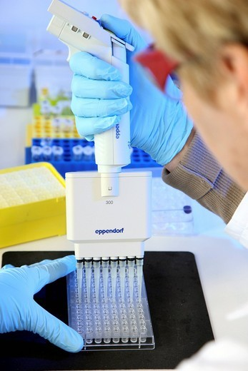 Laboratory, a scientist is transferring protein samples with a multichannel pipette onto a crystallisation plate, Centre for Medical Biotechnology University Duisburg_Essen, North Rhine_Westphalia, Germany, Europe : Stock Photo