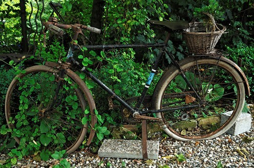 Old bicycle as decoration in a garden, Ambiance_Jardin bed and breakfast inn, 12, rue de l´Abbé street, Wendling, Diebolsheim, Alsace region, France, Europe : Stock Photo