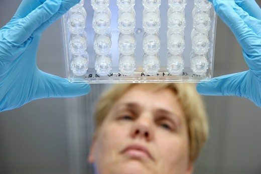 Laboratory, a scientist is checking the crystallisation plate for the crystallisation of proteins, Centre for Medical Biotechnology University Duisburg_Essen, North Rhine_Westphalia, Germany, Europe : Stock Photo