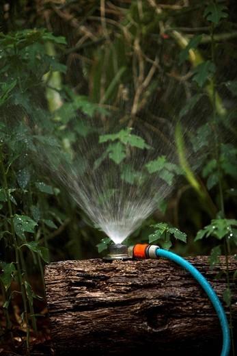 Garden hose and sprinkler : Stock Photo