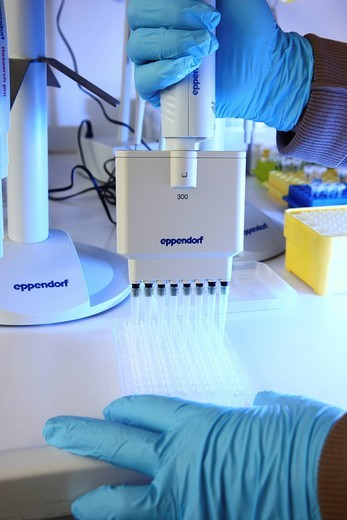 Stock Photo: 1848-556653 Laboratory, a scientiest is transferring protein samples with a multichannel pipette onto a crystallisation plate, Centre for Medical Biotechnology University Duisburg_Essen, North Rhine_Westphalia, Germany, Europe