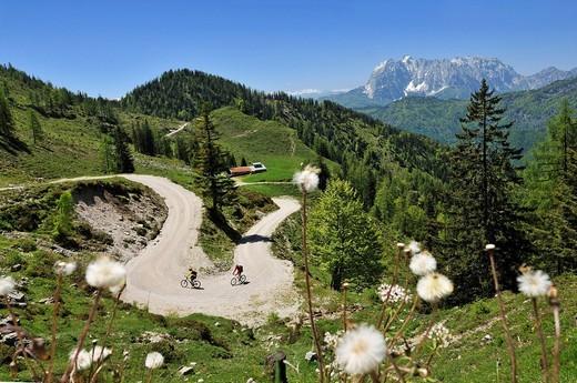 Mountain bikers, downhill to Kreuzangeralm, Mt. Wilder Kaiser at back, in Tyrol, Austria, Reit im Winkl, Bavaria, Germany, Europe : Stock Photo