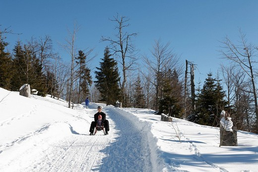 Sledders going down a wintry path, Lusen, Nationalpark Bayerischer Wald Bavarian Forest National Park, Lower Bavaria, Bavaria, Germany, Europe : Stock Photo