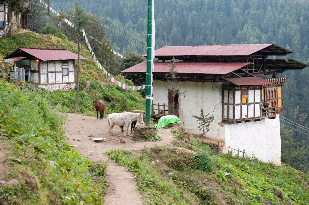 Tibetan Buddhism, horses, traditional houses, Tango Goemba Monastery, near Thimphu, the Himalayas, Kingdom of Bhutan, South Asia, Asia : Stock Photo