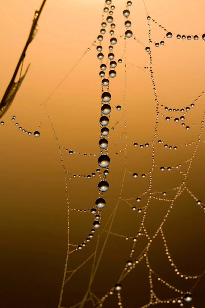 Stock Photo: 1848-564381 Dewdrops hanging on a fine thread of a spider´s web in the warm morning light