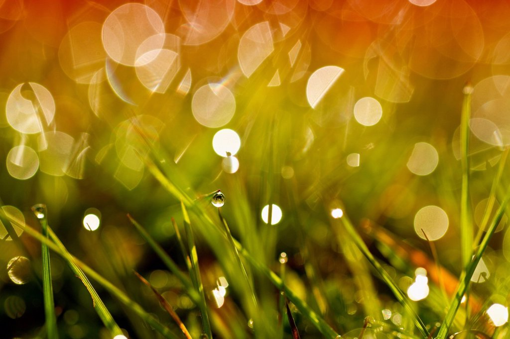 Stock Photo: 1848-564384 Dewdrops on grass