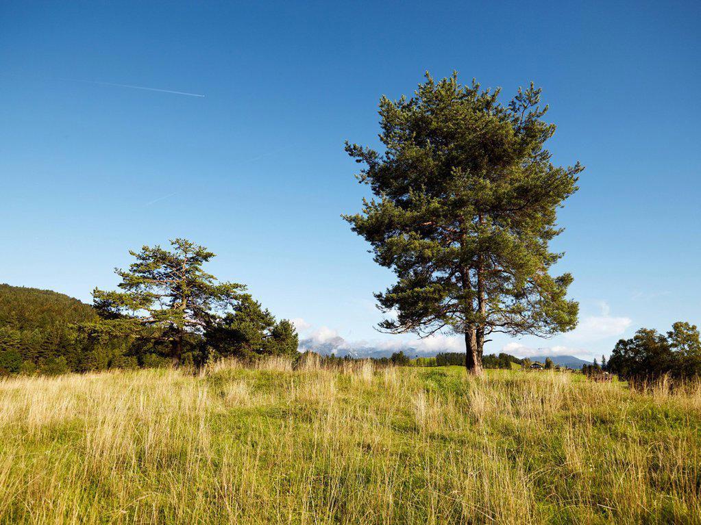Stock Photo: 1848-565406 Landscape at Schmalensee Lake, Bavaria, Germany, Europe