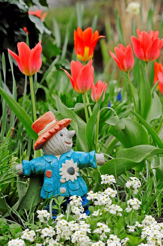 Garden figure and Tulips Tulipa spec., Bergkamen, North Rhine_Westphalia, Germany, Europe : Stock Photo