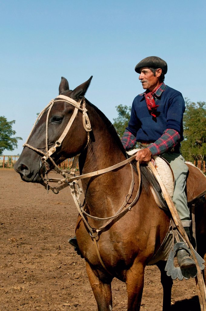 Stock Photo: 1848-567612 Gaucho on horseback, Estancia San Isidro del Llano towards Carmen Casares, Buenos Aires province, Argentina, South America