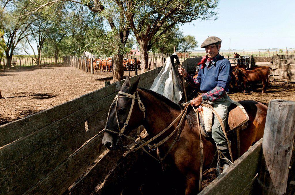 Gaucho on horseback, Estancia San Isidro del Llano towards Carmen Casares, Buenos Aires province, Argentina, South America : Stock Photo