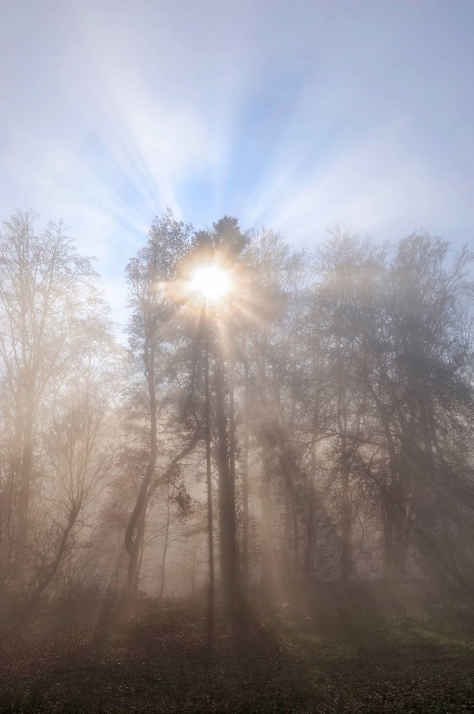 Stock Photo: 1848-570698 Sun rays filtering through a misty forest, Konstanz district, Baden_Wuerttemberg, Germany, Europe