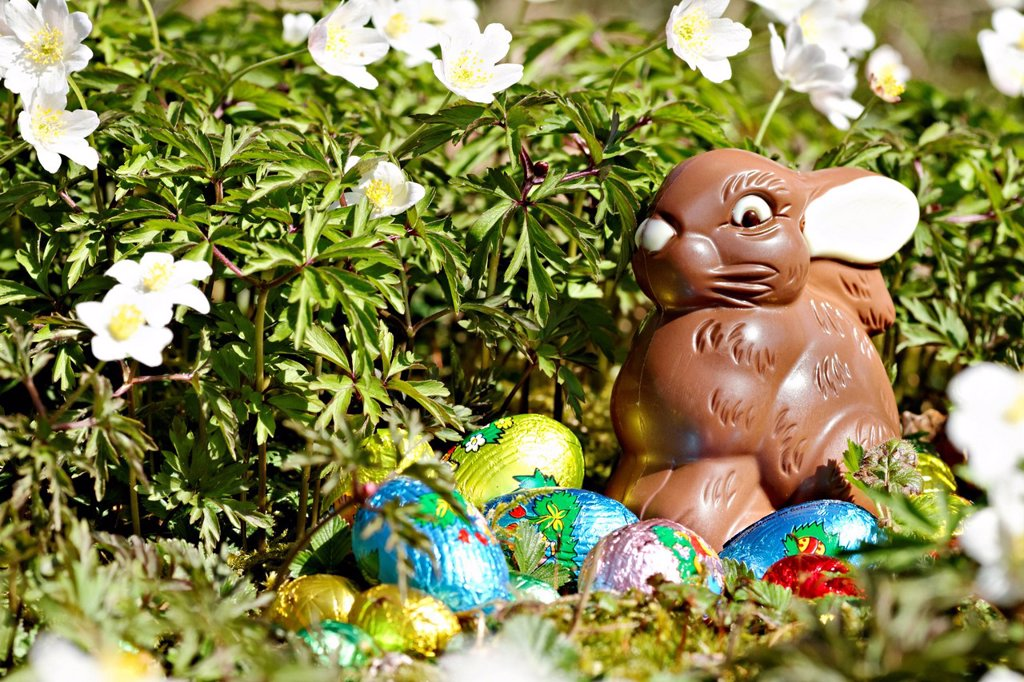 Stock Photo: 1848-572785 Chocolate Easter rabbit in garden