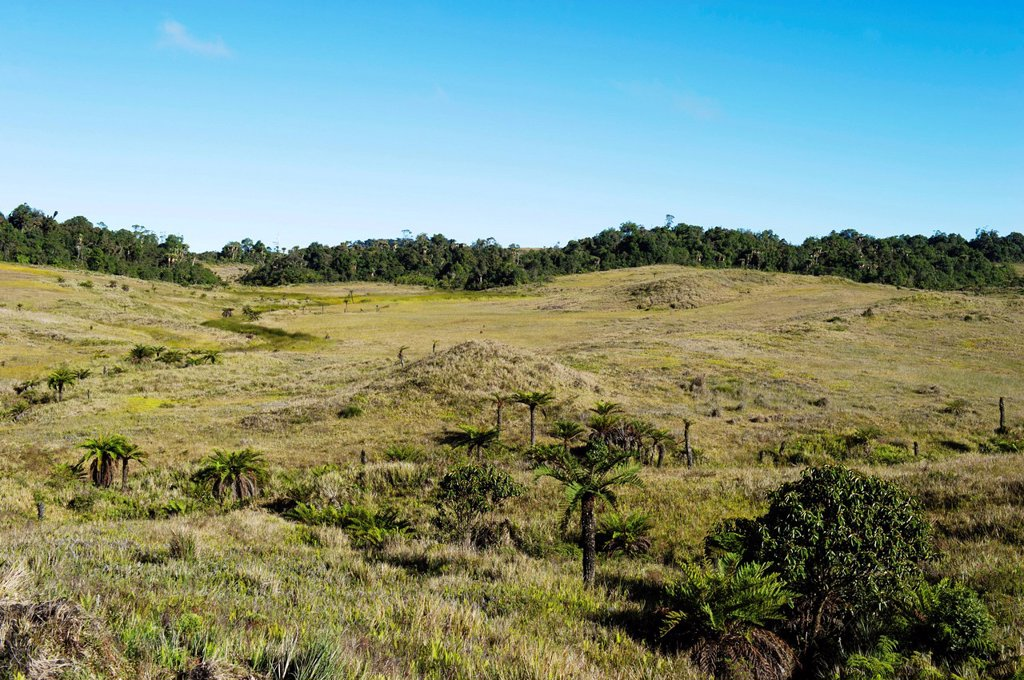 Stock Photo: 1848-576417 Alpine grassland at Tari Gap, Southern Highlands, Papua New Guinea, Oceania