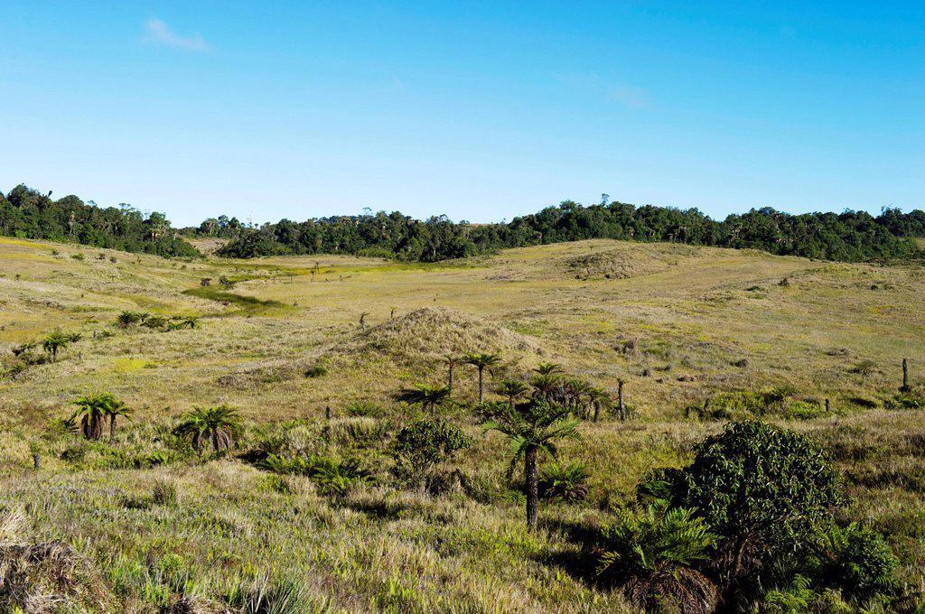 Alpine grassland at Tari Gap, Southern Highlands, Papua New Guinea, Oceania : Stock Photo