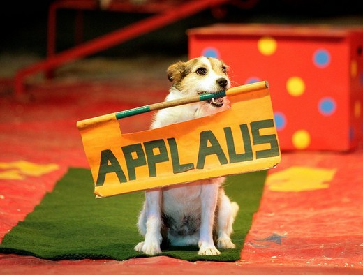 Dog wants to have applause in the circus : Stock Photo