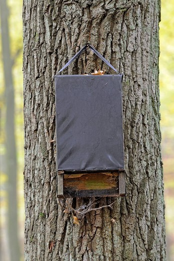 Bat box, Maerkische Schweiz Nature Park, Buckow, Brandenburg, Germany, Europe : Stock Photo