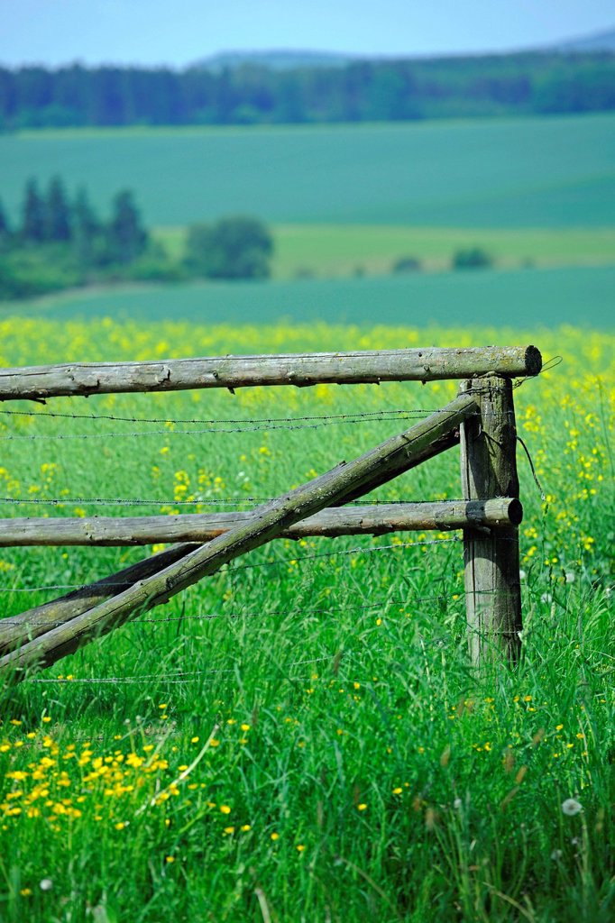Stock Photo: 1848-579858 Old fence in a flowery meadow, Hesse, Germany, Europe