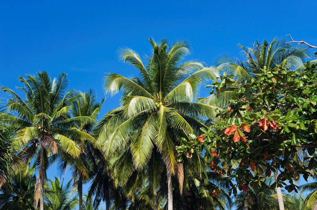 Stock Photo: 1848-586769 Coconut palms on the beach, Andaman Beach, Ko Jum or Koh Pu island, Krabi, Thailand, Southeast Asia