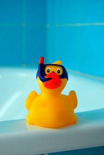 Yellow rubber duck in a blue bathroom : Stock Photo