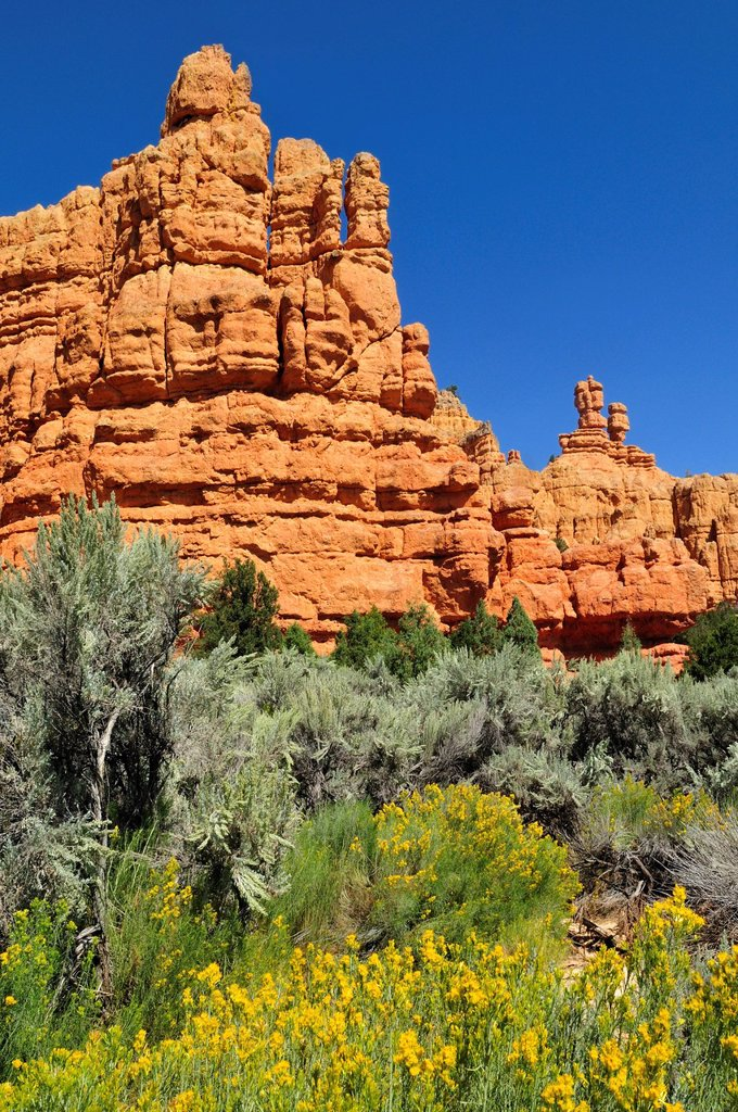 Claron rock formation, Dixie National Forest, Utah, USA, North America : Stock Photo