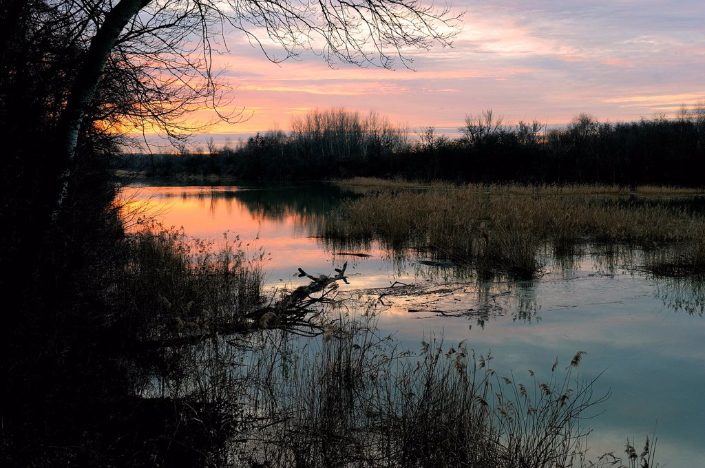 Stock Photo: 1848-588352 Early morning in the winter, Danube wetlands, Donau Auen National Park, Lower Austria, Austria, Europe