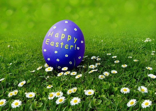 Blue Easter egg with ´´Frohe Osten´´ wishes, German for ´´Happy Easter´´ on a meadow with daisies : Stock Photo