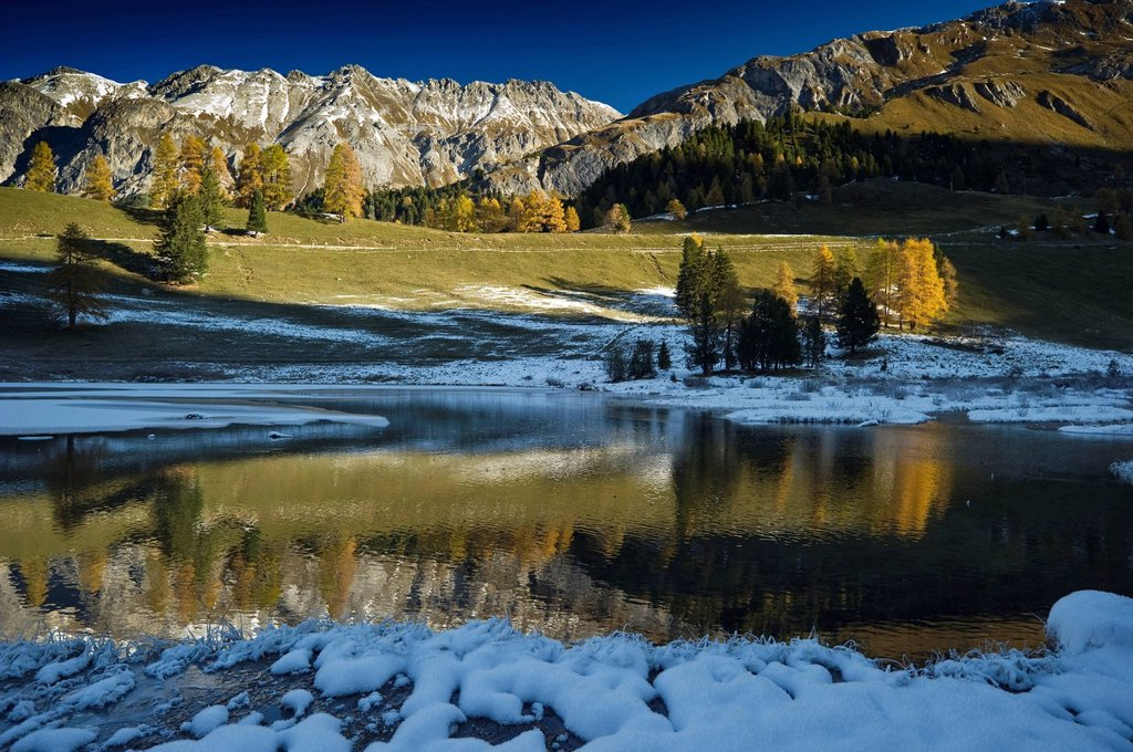 Stock Photo: 1848-589328 Lake Palpuogna, Lai da Palpuogna, with autumnal larches, snow, Berguen, Albula Pass, Canton of Grisons, Switzerland, Europe