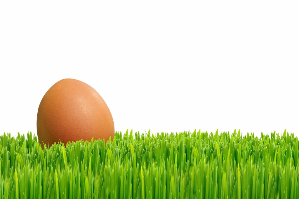 Egg on green grass : Stock Photo