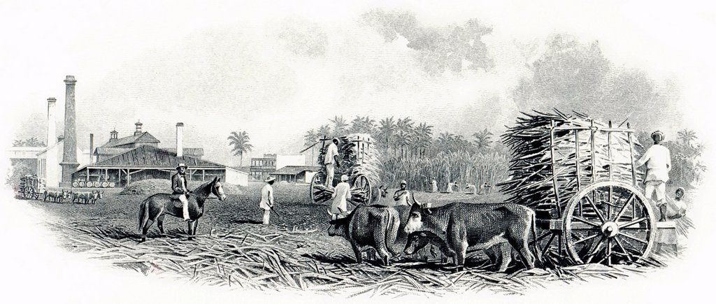 Stock Photo: 1848-591867 Detail of the illustration in the vignette of a historical stock certificate of a sugar mill, design showing sugar cane being loaded on a wagon drawn by oxen, in front of a factory scene from a colony in the 19th Century, The American Sugar Refining Compa. Detail of the illustration in the vignette of a historical stock certificate of a sugar mill, design showing sugar cane being loaded on a wagon drawn by oxen, in front of a factory scene from a colony in the 19th Century, The American Sugar Re