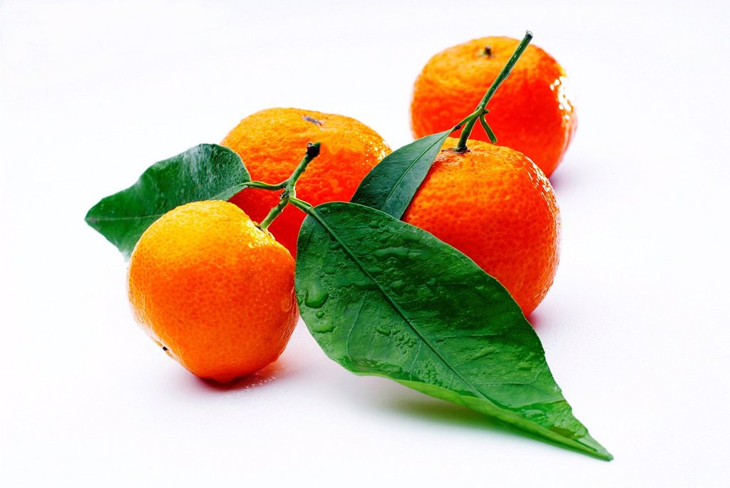 Stock Photo: 1848-591950 Bitter Oranges Citrus × aurantium