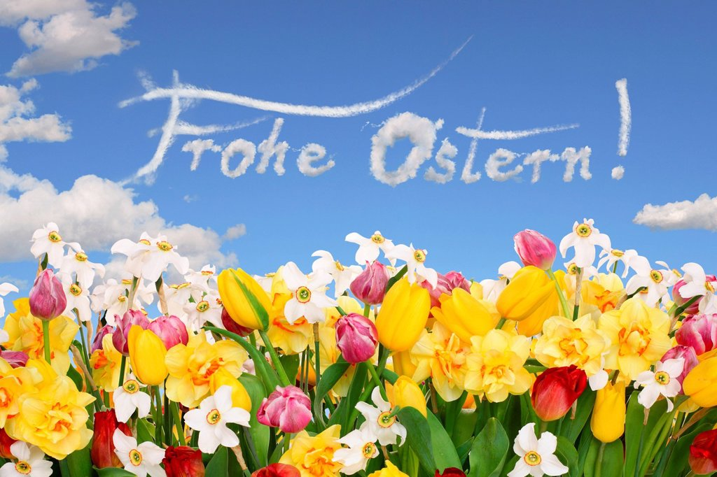 Stock Photo: 1848-592629 Field of flowers, lettering ´´Frohe Ostern´´, German for ´´Happy Easter´´