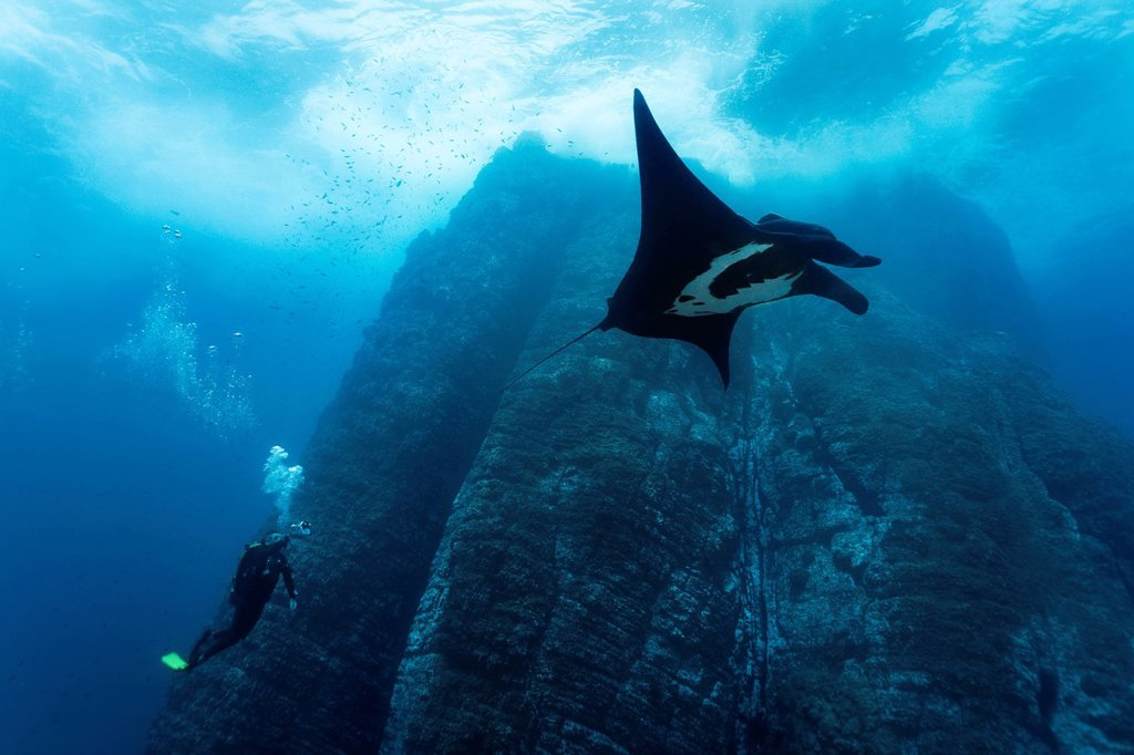 Scuba diver, underwater photographer taking pictures of Giant Oceanic Manta Ray Manta birostris, underwater cliffs, Roca Partida, Revillagigedo Islands, Mexico, America, Eastern Pacific : Stock Photo