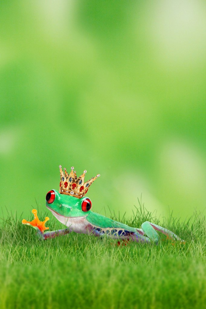 Frog wearing a golden crown on the grass : Stock Photo