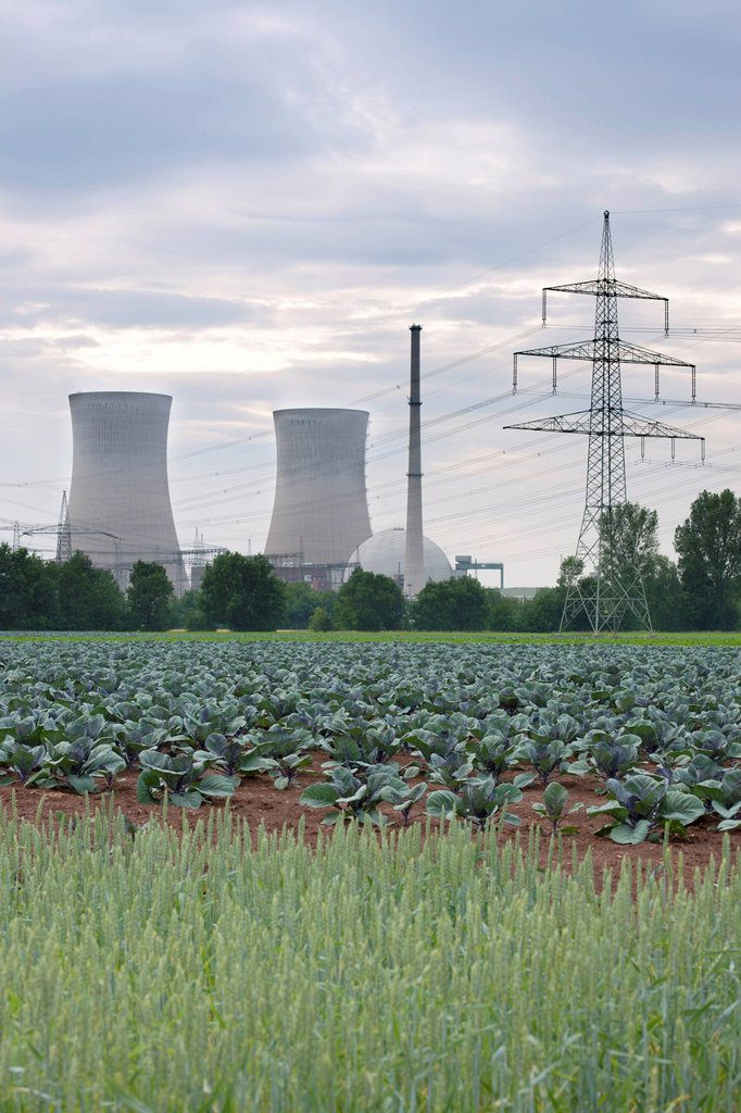 Stock Photo: 1848-594706 Grafenrheinfeld nuclear power plant, red cabbage patch at front, Lower Franconia, Bavaria, Germany, Europe