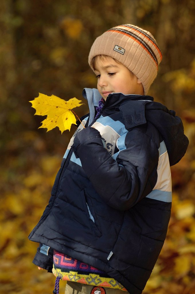 Boy, 5 years, playing with yellow maple leaves in the forest, autumn : Stock Photo