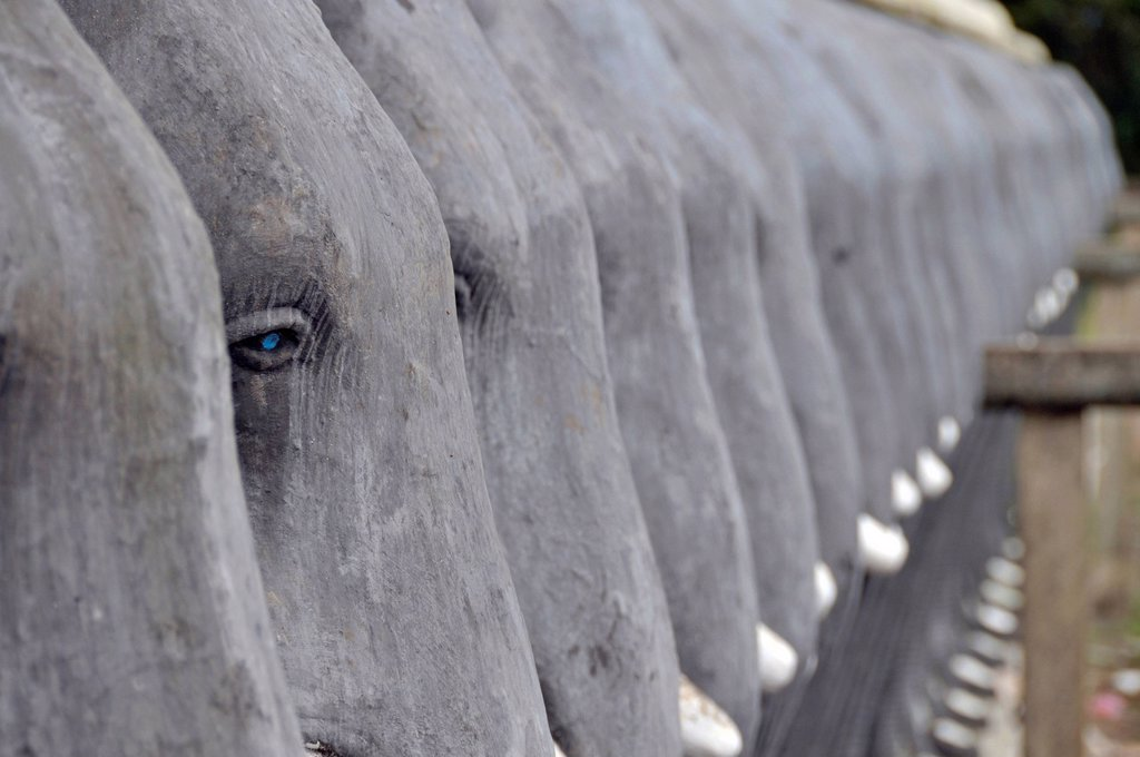 Stock Photo: 1848-600268 Elephant wall, Ruvanveli Seya Dagoba, Anuradhapura, Unesco World Heritage site, Sri Lanka, Ceylon, South Asia, Asia