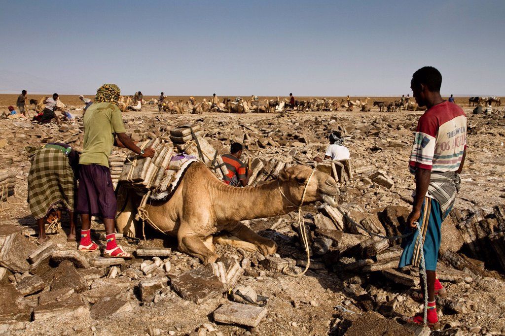 Stock Photo: 1848-601479 Afar workers loading a camel with salt blocks in the salt mines of Dallol, Danakil Depression, Ethiopia, Africa