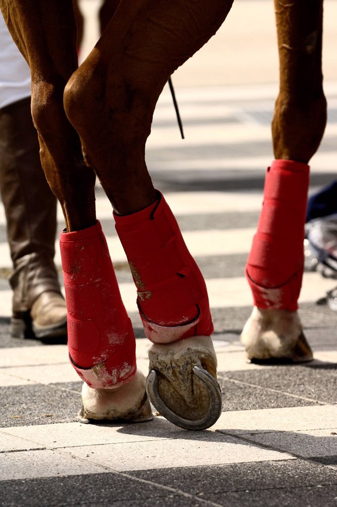 Stock Photo: 1848-602522 Polo horse with red bandages, Airport Arena Polo Event 2010, Munich, Upper Bavaria, Bavaria, Germany, Europe