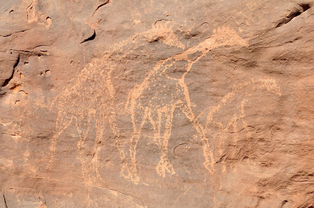 Giraffe engraving, neolithic rockart of the Acacus Mountains or Tadrart Acacus range, Tassili n´Ajjer National Park, Unesco World Heritage Site, Algeria, Sahara, North Africa : Stock Photo