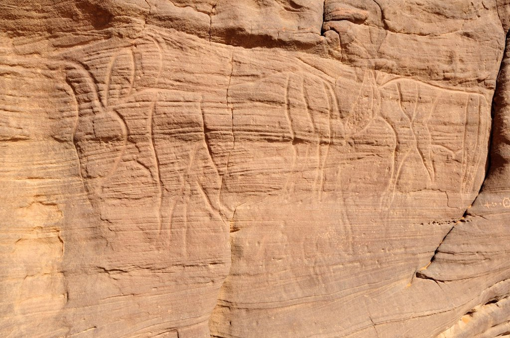 Stock Photo: 1848-602847 Bull engraving, neolithic rock art in the Tadrart, Tassili n´Ajjer National Park, Unesco World Heritage Site, Algeria, Sahara, North Africa