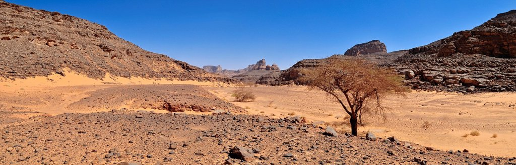 Stock Photo: 1848-604586 Large Wadi, Oued with acacia tree, Tadrart, Tassili n´Ajjer National Park, Unesco World Heritage Site, Algeria, Sahara, North Africa