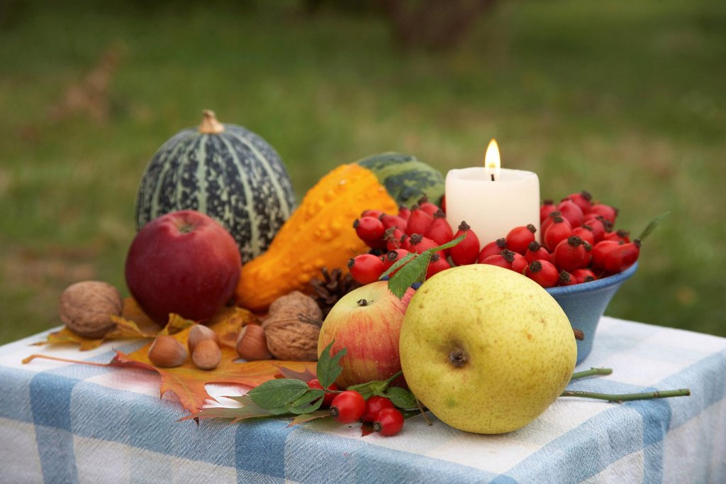 Stock Photo: 1848-605451 Thanksgiving table with candle, rose hips, ornamental pumpkins, apples, pears and nuts, colorful leaves