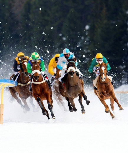 Horse racing, White Turf in St. Moritz, flat race, Alexander Pietsch on Designated Decoy, Sebastian Malloit on Peace Keeper, Robert Havlin on Puro, Am. Catherine Burri on Shakalaka, Eric Wehrel on Raneb, St. Moritz, Graubuenden or Grisons, Switzerland, Eu. Horse racing, White Turf in St. Moritz, flat race, Alexander Pietsch on Designated Decoy, Sebastian Malloit on Peace Keeper, Robert Havlin on Puro, Am. Catherine Burri on Shakalaka, Eric Wehrel on Raneb, St. Moritz, Graubuenden or Grisons, Swi : Stock Photo