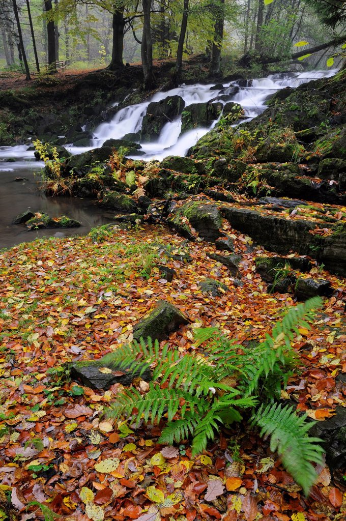 Stock Photo: 1848-607596 Waterfall in the Selketal valley in autumn, Harz mountain range, Saxony_Anhalt, Germany, Europe