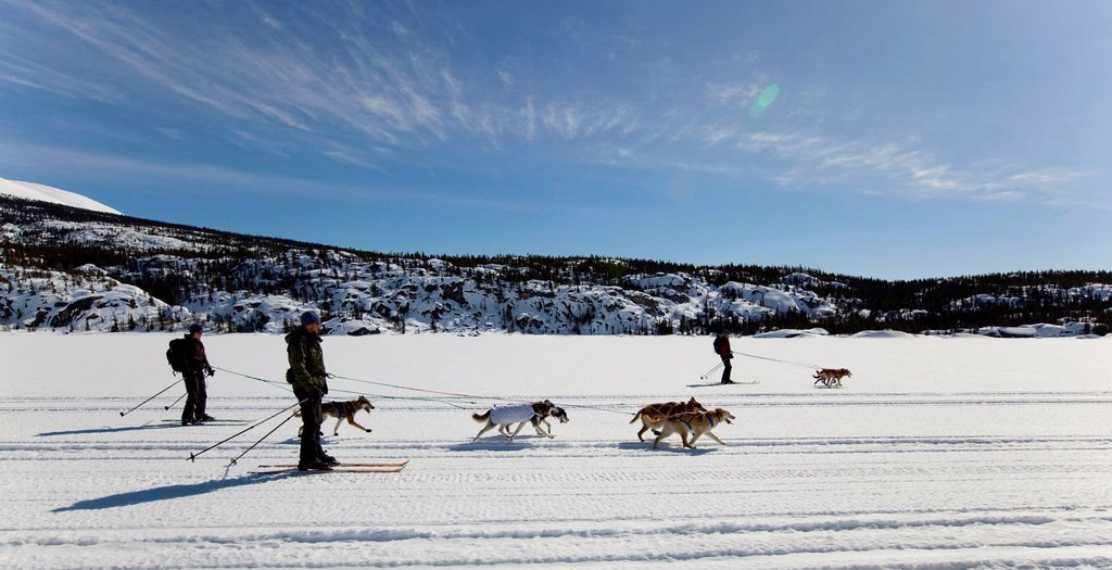 Group skijoring, skijoering, sled dogs pulling cross country skier, dog sport, Alaskan Huskies, frozen Lake Lindeman, mountains behind, Coastal Range, Chilkoot Pass, Chilkoot Trail, Yukon Territory, British Columbia, B. C., Canada : Stock Photo