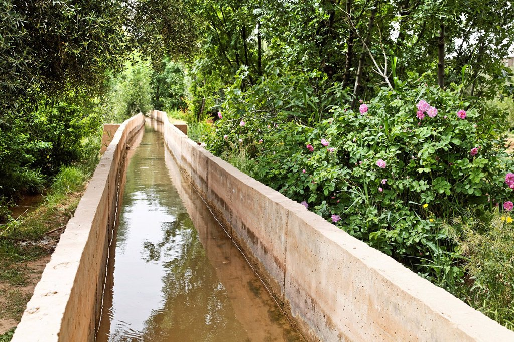Stock Photo: 1848-611668 Concrete irrigation canal which irrigates an oasis where Damask Roses Rosa damascena are organically grown, Valley of Roses, Dades Valley, southern Morocco, Morocco, Africa