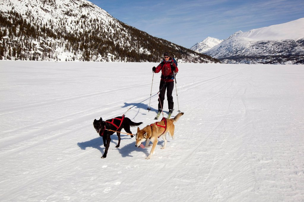 Stock Photo: 1848-612297 Woman skijoring, skijoering, sled dogs pulling cross country skier, dog sport, Alaskan Huskies, frozen Lake Lindeman, mountains behind, Coastal Range, Chilkoot Pass, Chilkoot Trail, Yukon Territory, British Columbia, B. C., Canada